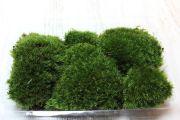 プレミアム山苔パック,苔,苔玉,ミニ盆栽,盆栽通販,
